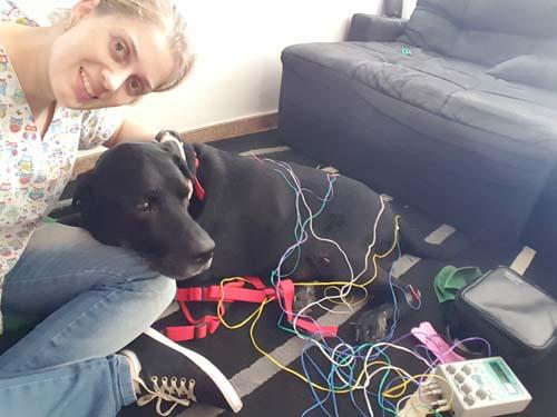 acupuntura em cão bh