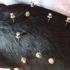acupuntura em cachorro em bh
