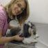 clinica veterinaria em bh